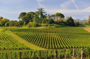 chateau la croizille vue vignobles